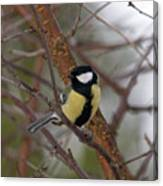 Great Tit Male Canvas Print
