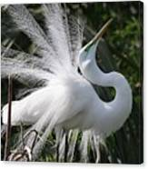 Great White Egret 2 Canvas Print