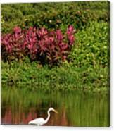 Great White Egret Fishing In A Pond With Tropical Plants And Sie Canvas Print