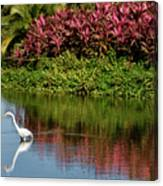 Great White Egret Hunting In A Pond In Mexico With Iguana And Re Canvas Print