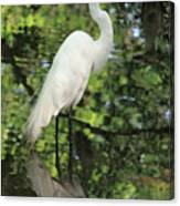 Great White Egret In Spring Canvas Print