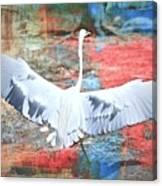 Great White Egret Landing Canvas Print