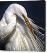 Great White Egret Print One Canvas Print