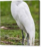 Great White Egret Vertical Canvas Print