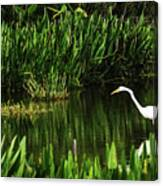 Great White Heron Green Cay Wetlands Canvas Print