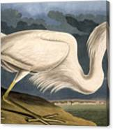 Great White Heron Canvas Print