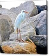 Great White Heron Of Florida Canvas Print