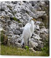 Great White Heron Race Canvas Print