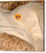 Great White Pelican Canvas Print