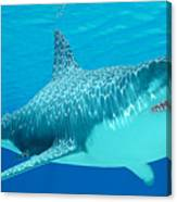 Great White Shark Undersea Canvas Print