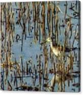 Greater Yellowleg In Reeds Canvas Print