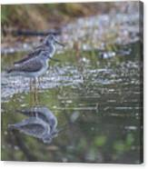 Greater Yellowlegs Reflected Canvas Print