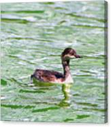 Grebe On Green Water Canvas Print