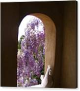 Greece Wisteria Through Arched Window Canvas Print