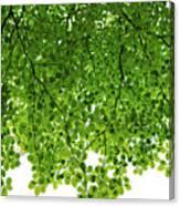 Green #001 Canvas Print