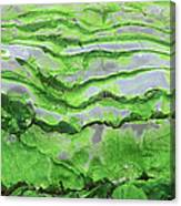 Green Algae Patterns On Exposed Rock At Low Tide, Gros Morne National Park, Ontario, Canada Canvas Print