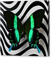 Green And Black Butterfly On Wavey Lines Canvas Print