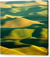 Green And Gold Acres Canvas Print