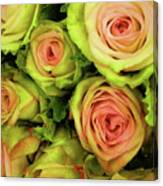Green And Pink Rose Bouquet Canvas Print