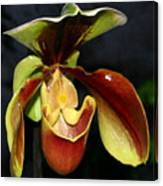 Green And Red Orchid Canvas Print