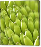 Green Banana Bunch Canvas Print