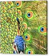 Green Blue Peacock Showing Off His Feathered Tail No2 Canvas Print