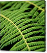 Green Bracken Canvas Print
