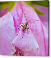 Green Bug On Rose Petal Canvas Print