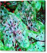 Green Caladium Canvas Print