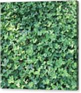 Green Clovers Canvas Print