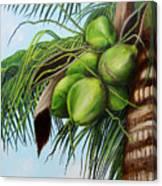 Green Coconuts- 01 Canvas Print