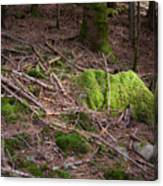 Green Covered Rock Canvas Print