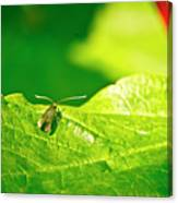 Green Creature On A Broad Leaf. Canvas Print