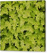 Green Curtain Canvas Print