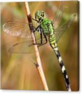 Green Dragonfly Closeup Canvas Print