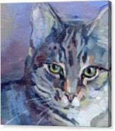 Green Eyed Tabby - Thomasina Canvas Print