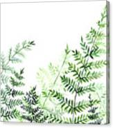 Green Fern Leaves Canvas Print