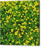 Green Field Of Yellow Flowers 1 Canvas Print