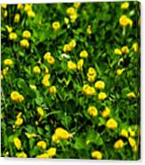 Green Field Of Yellow Flowers 4 Canvas Print