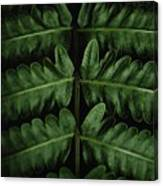 Green Foilage Of Indonesia Canvas Print