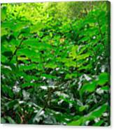 Green Foliage Canvas Print