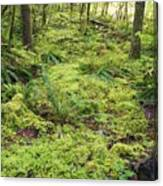 Green Foliage On The Forest Floor Canvas Print