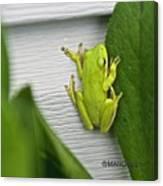 Green Frog Canvas Print