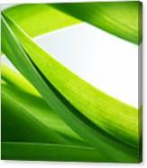 Green Grass Background Canvas Print