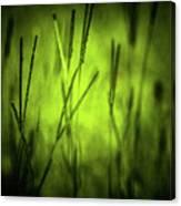 Green Grass Grow Glow Canvas Print