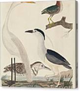 Green Heron, Night Heron, Young Heron, And Great White Heron Canvas Print