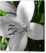 Green Highlighted Lily Canvas Print