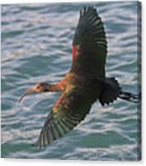Green Ibis 6 Canvas Print