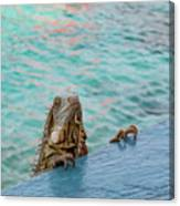 Green Iguana Peering Over Wall Canvas Print