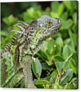 Green Iguana Vertical Canvas Print